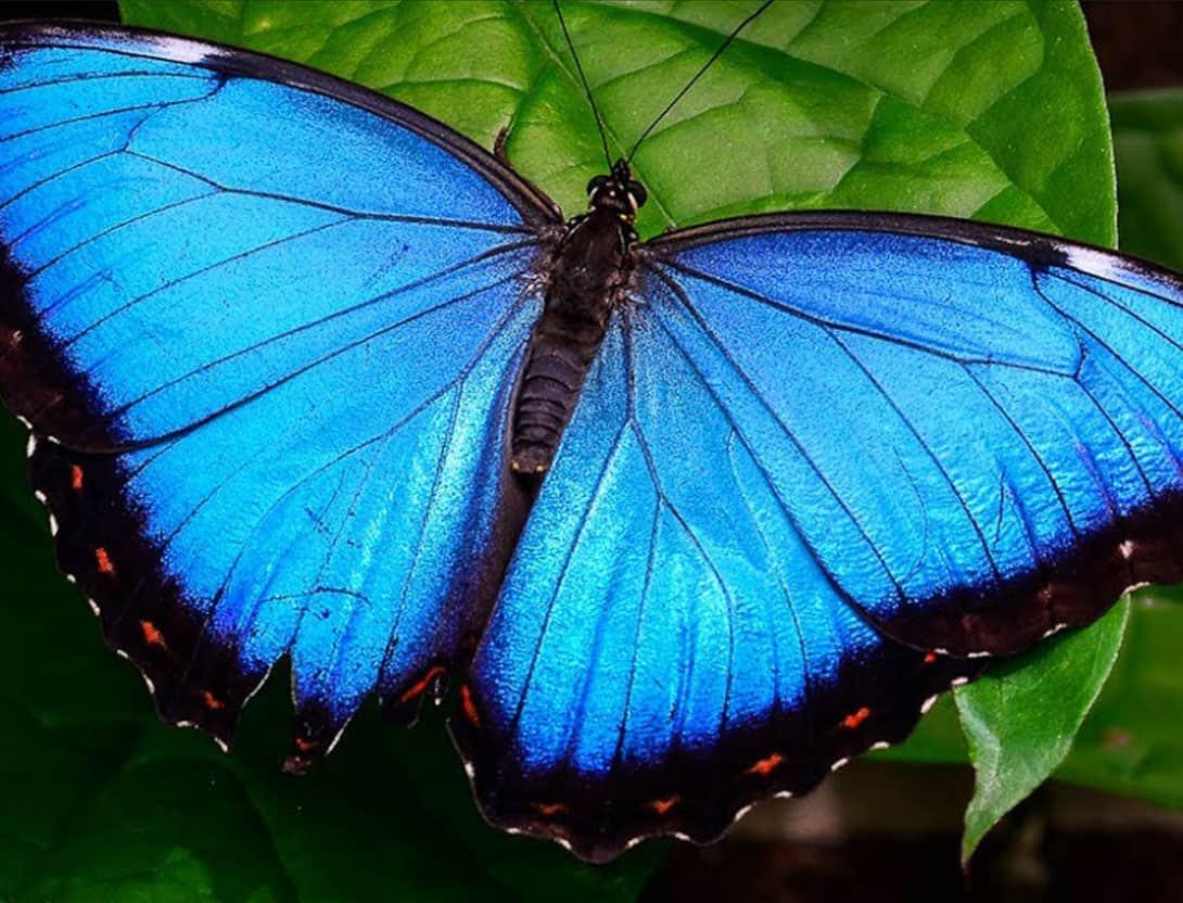 Мир бабочек: красота преображения