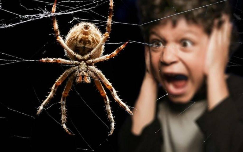 Кусаются ли тараканы? укусы таракана: как определить, обработать, вылечить. опасность.