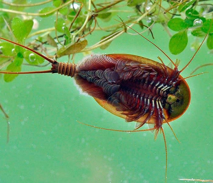 Аквариумные мхи - все о мшарнике: описание, оформление, виды, фото-видео обзор