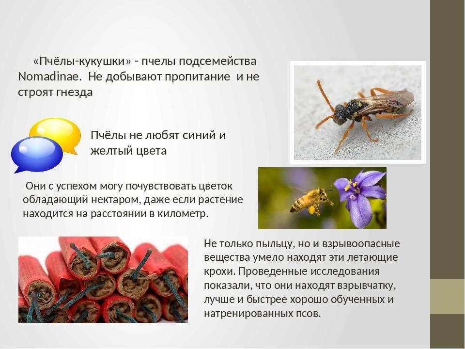 Про пчел для детей: ознакомительная информация, история пчеловодства, интересные факты о насекомых и меде