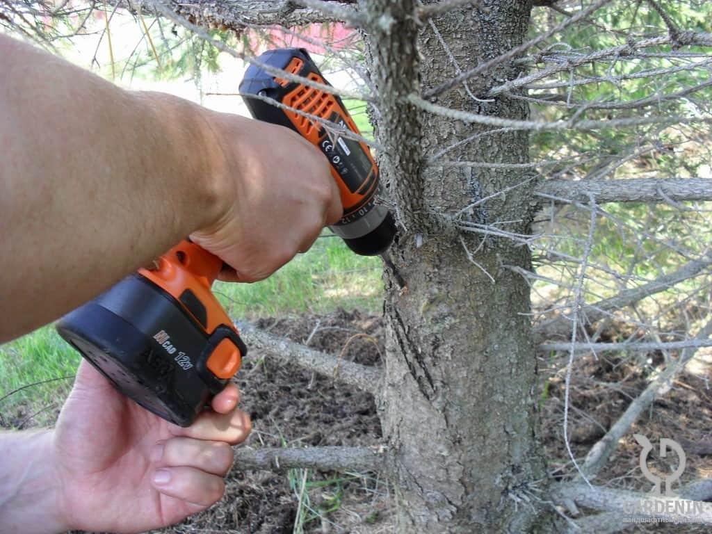 Как избавиться от короеда на плодовых деревях в саду