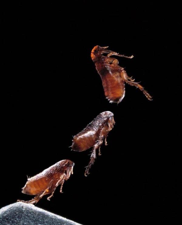 Топ 10 | самые прыгучие животные