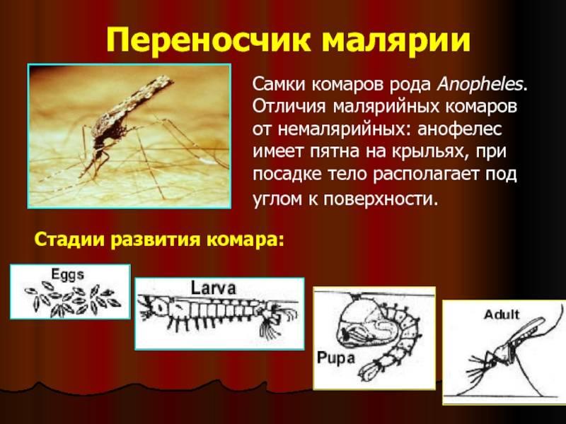 Отличие комара от москита