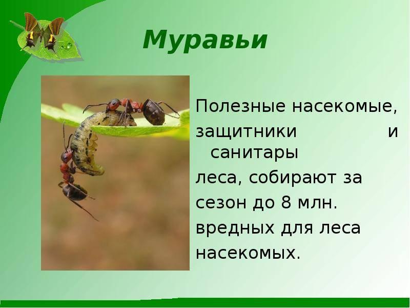 Муравьи в огороде. польза, вред и как бороться с муравьями в огороде | сад и огород.ру