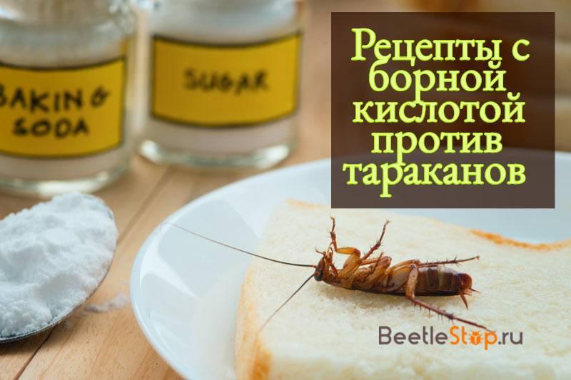 Борная кислота от тараканов: эффективные рецепты, как приготовить действующий препарат