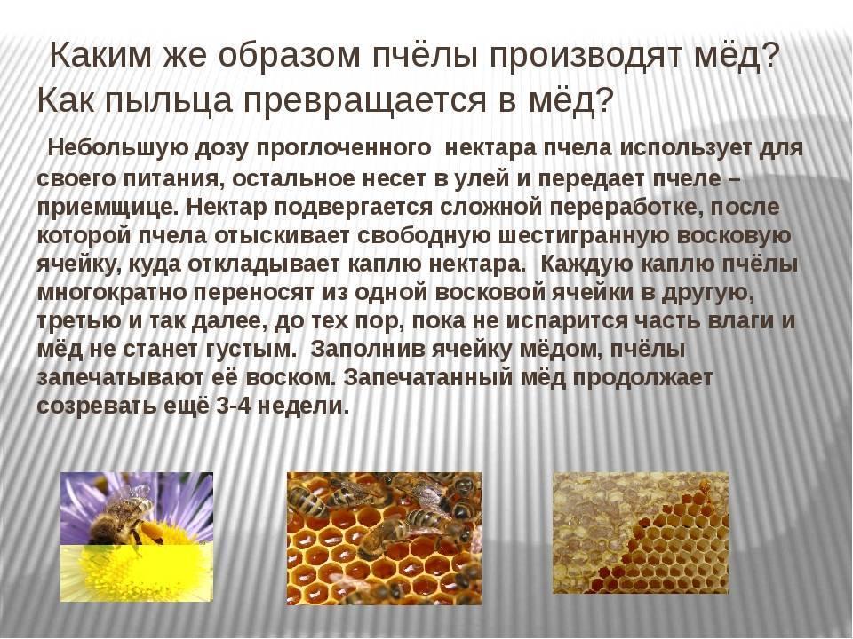 Укус пчелы: первая помощь и как избежать | компетентно о здоровье на ilive