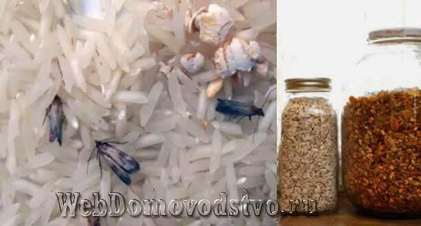 Как избавиться от жучков в крупе в шкафу