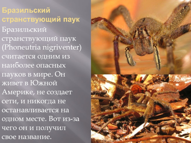Ядовитые существа, которые обитают только на территории россии - zefirka