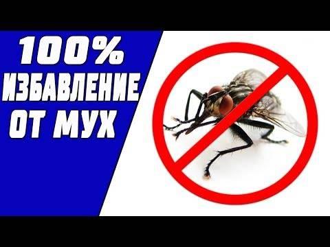 Как избавиться от мух дома - обзор лучших народных средств и инсектицидов