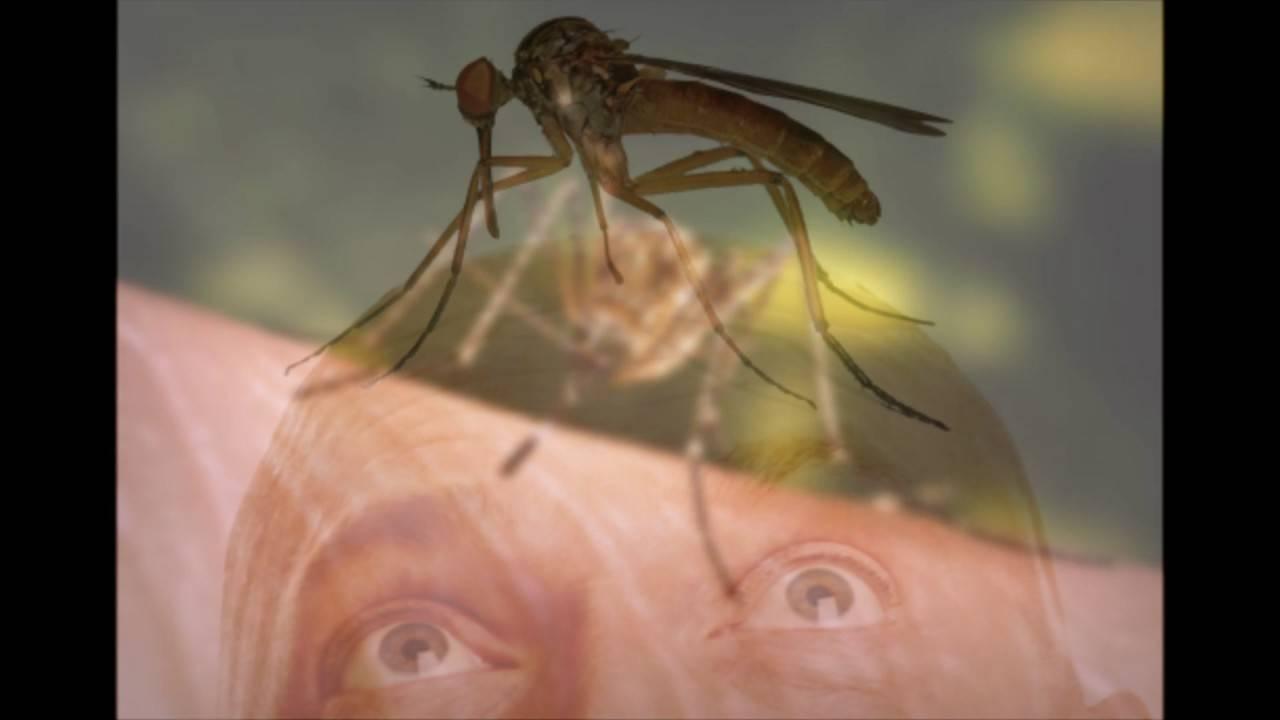 Комар: описание, питание, повадки, почему кусаются, размножение, виды, фото и видео  - «как и почему»