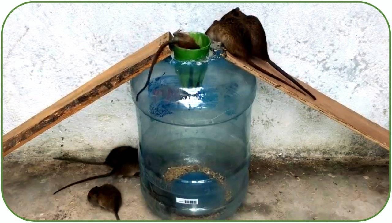Самодельные ловушки для мышей из пластиковой бутылки