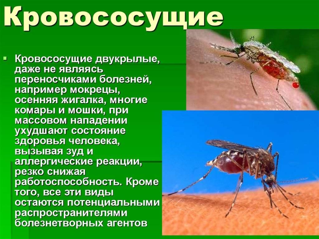 Опасность малярийного комара: чем опасны, заражение малярией, уничтожение