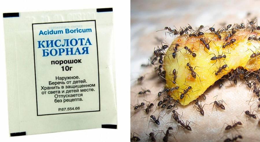 Как травить тараканов борной кислотой, рецепты средств уничтожения