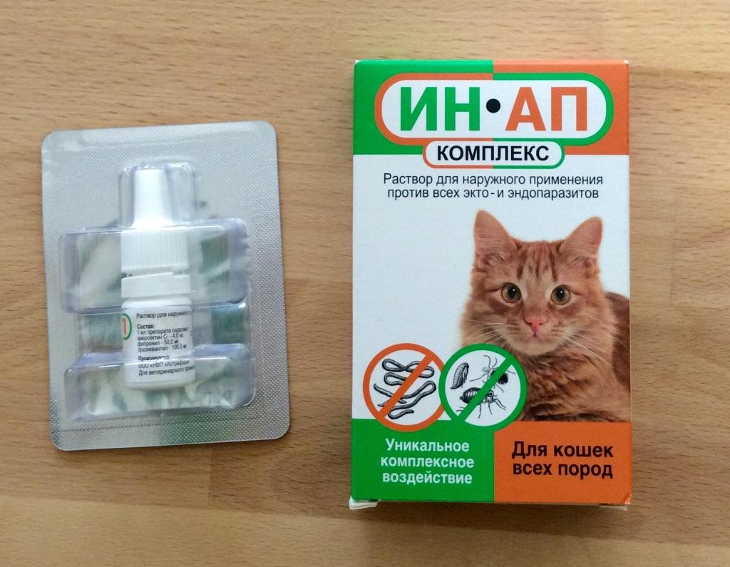 Симптомы глистов у кошки: первые признаки ленточных, легочных и кишечных глистов, как определить наличие гельминтов