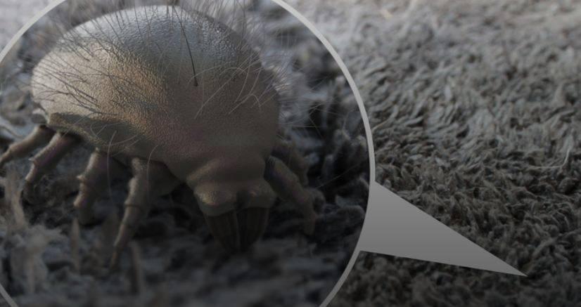 Акарицидные средства от пылевых клещей: купить на втв сервис