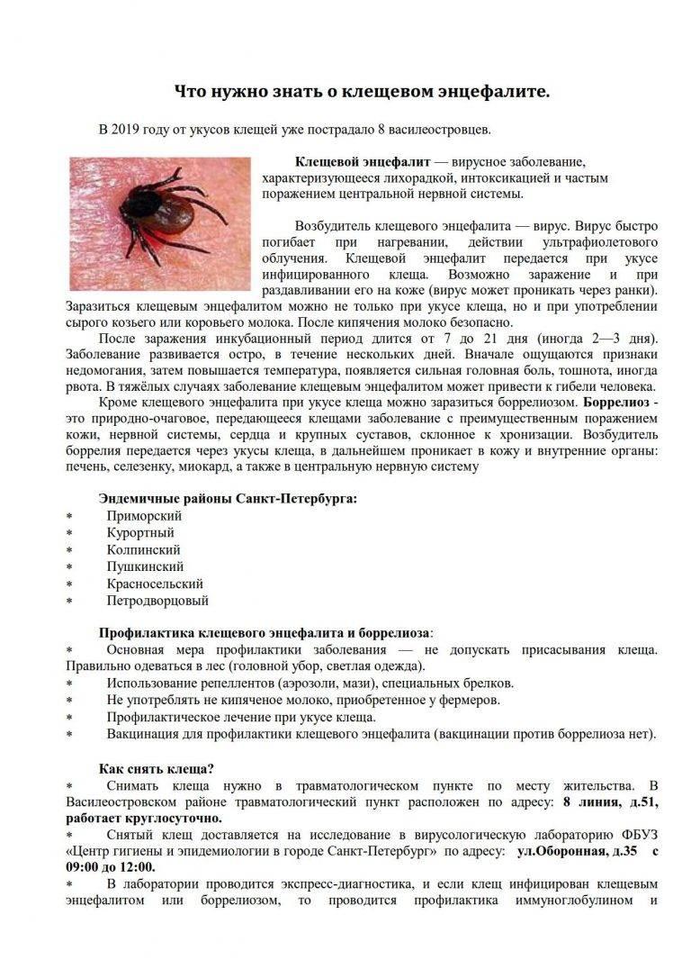 Анализ крови после укуса клеща и интерпретация результатов