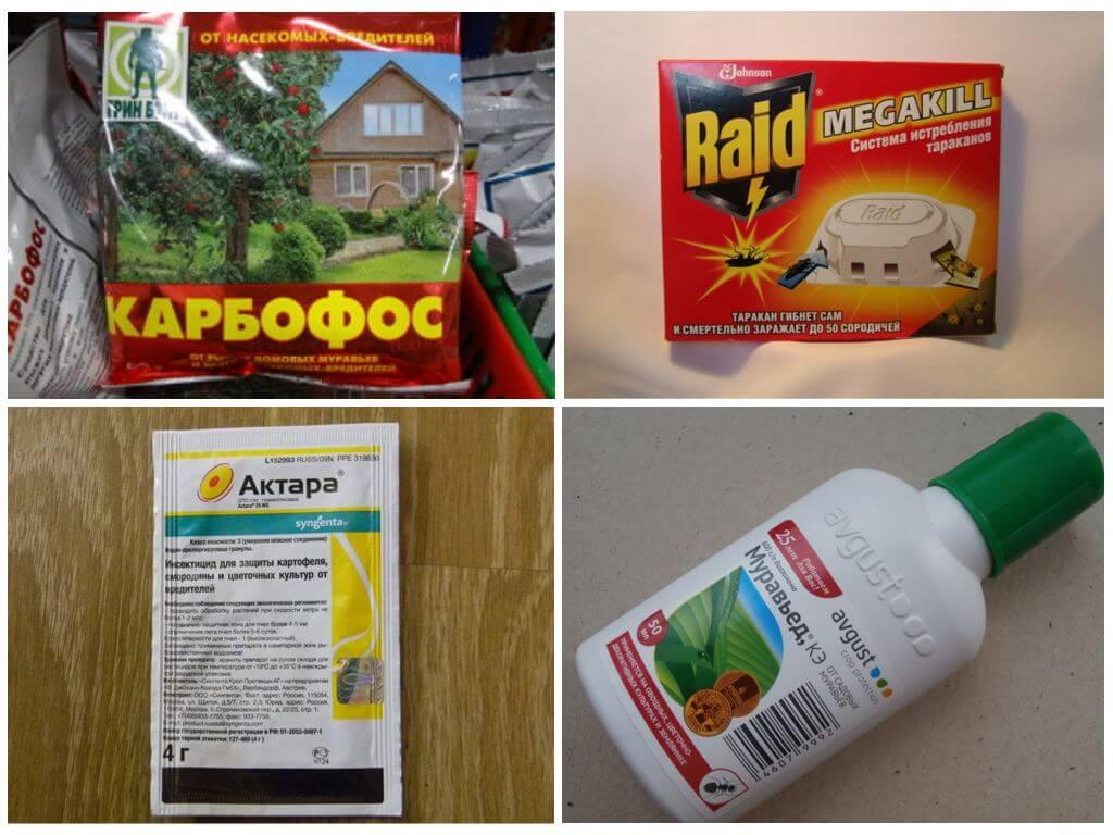 Муравьи на кухне: эффективные способы избавления от насекомых