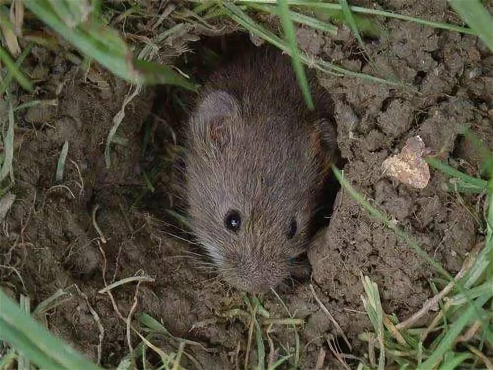 Летучие мыши: чем питаются, виды, сколько живут, среда обитания