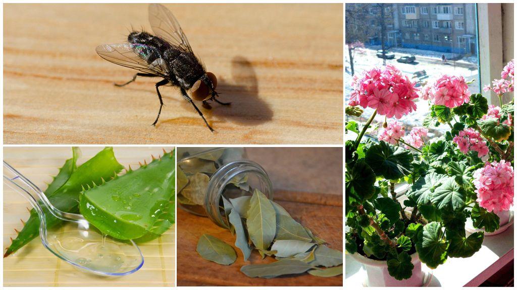 Дачные растения, отпугивающие комаров