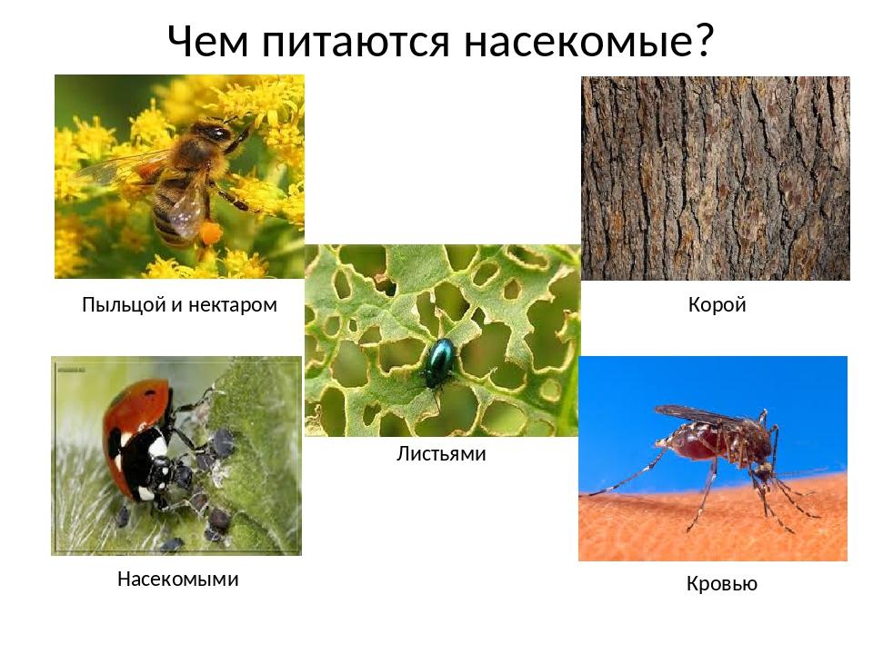 Чем питаются стрекозы – описание, особенности и интересные факты - gkd.ru