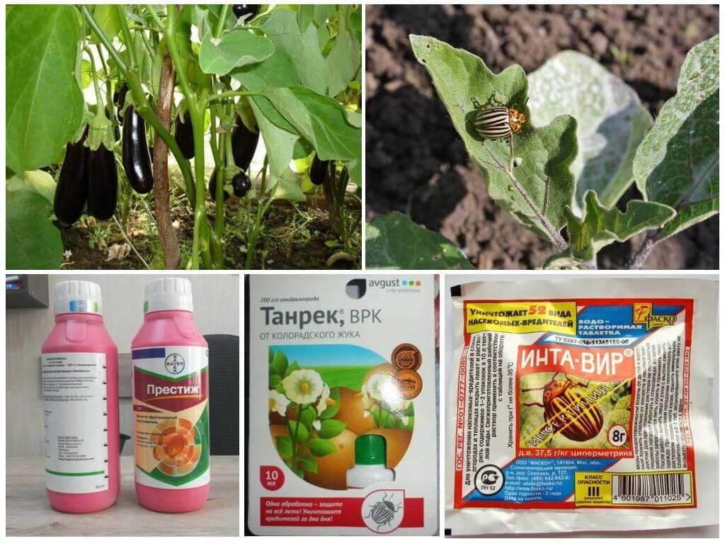 10 народных средств от колорадского жука на картошке – дачные дела