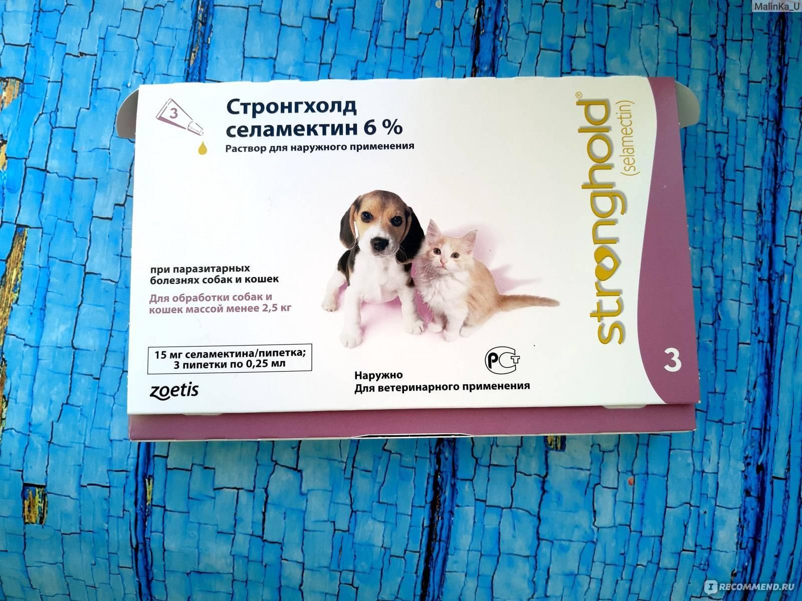 Блохи у собаки – как вывести и чем лечить?