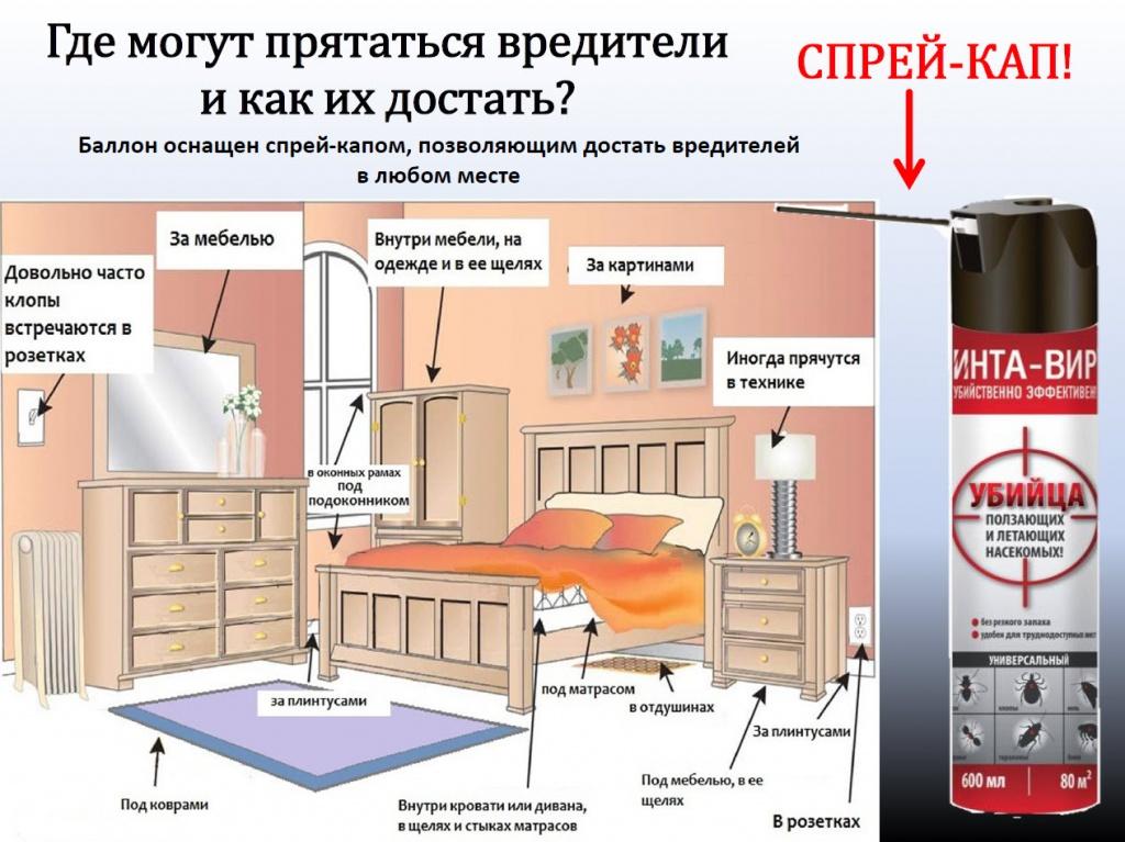Где живут клопы в квартире и где прячутся днем