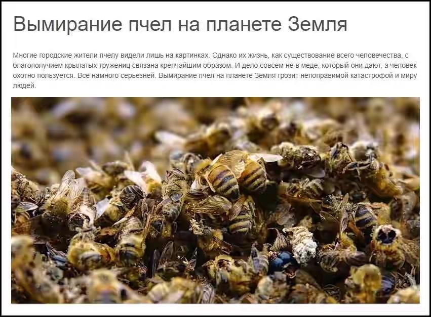 Гибель пчел осенью: причины гибели
