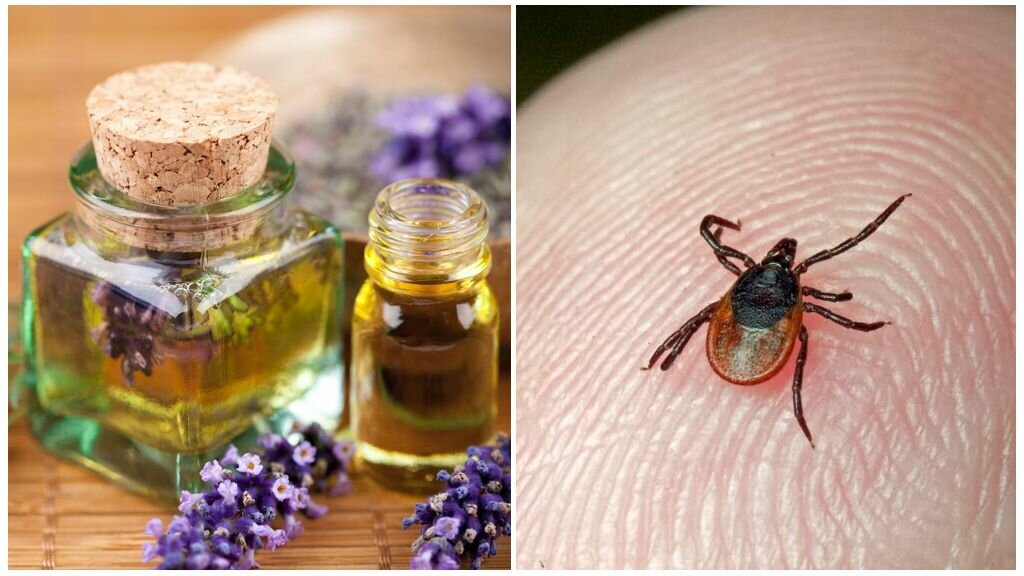 Нашатырный спирт от тараканов в квартире: рецепты народных средств для борьбы с паразитами, отзывы об аммиаке