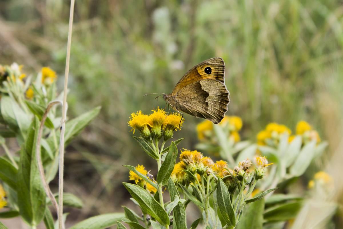 Читать онлайн «роман с бабочками» автора рассел шарман эпт — rulit — страница 2