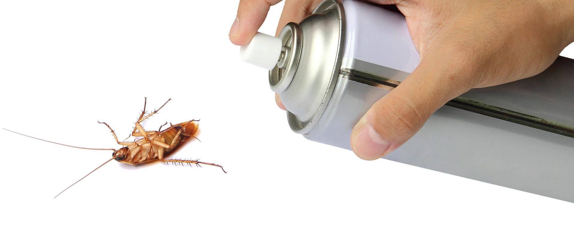 Как проводить профилактику и средства борьбы с тараканами