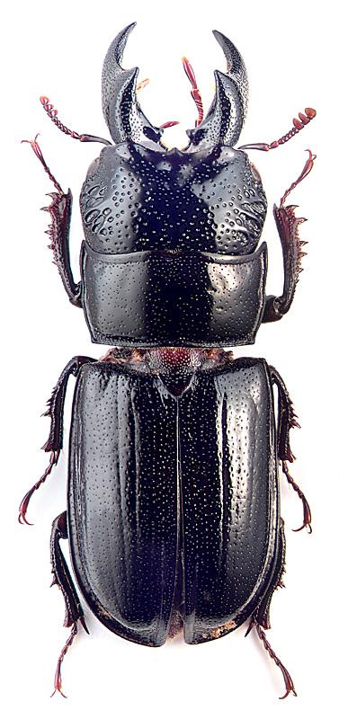 Насекомые жуки: особенности группы и характерные признаки