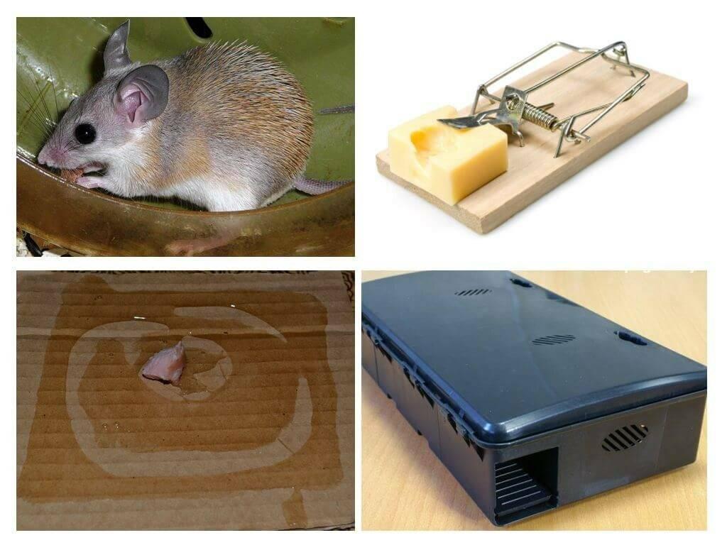 Как избавиться от крыс и мышей в частном доме: обзор методов и средств, позволяющих быстро одолеть грызунов