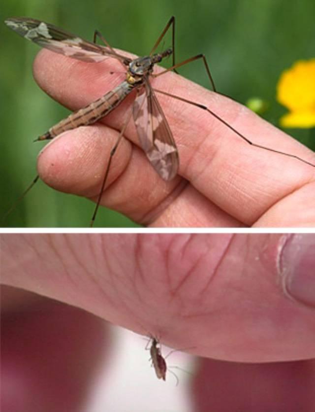 Что будет, если укусит малярийный комар и что нужно делать