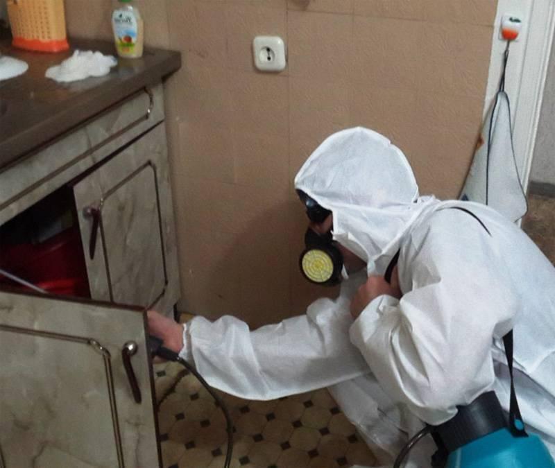 Обработка от клопов: способы уничтожения паразитов, подготовка
