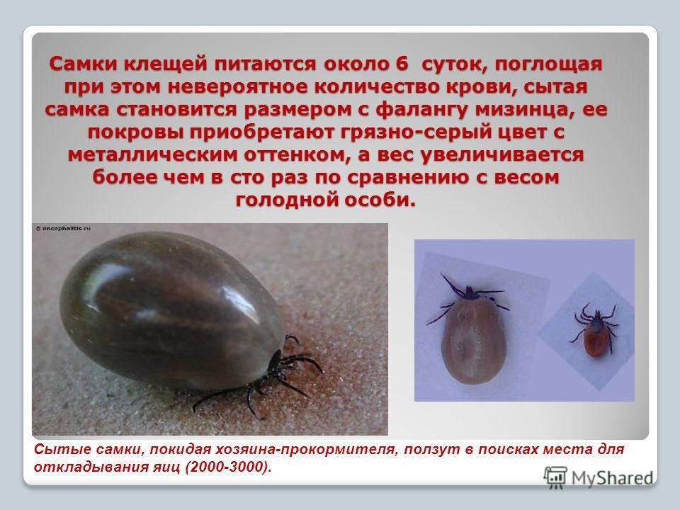 Клещи – царство животные. кто они – животные или насекомые. клещи на человеке и на животных. роль в природе