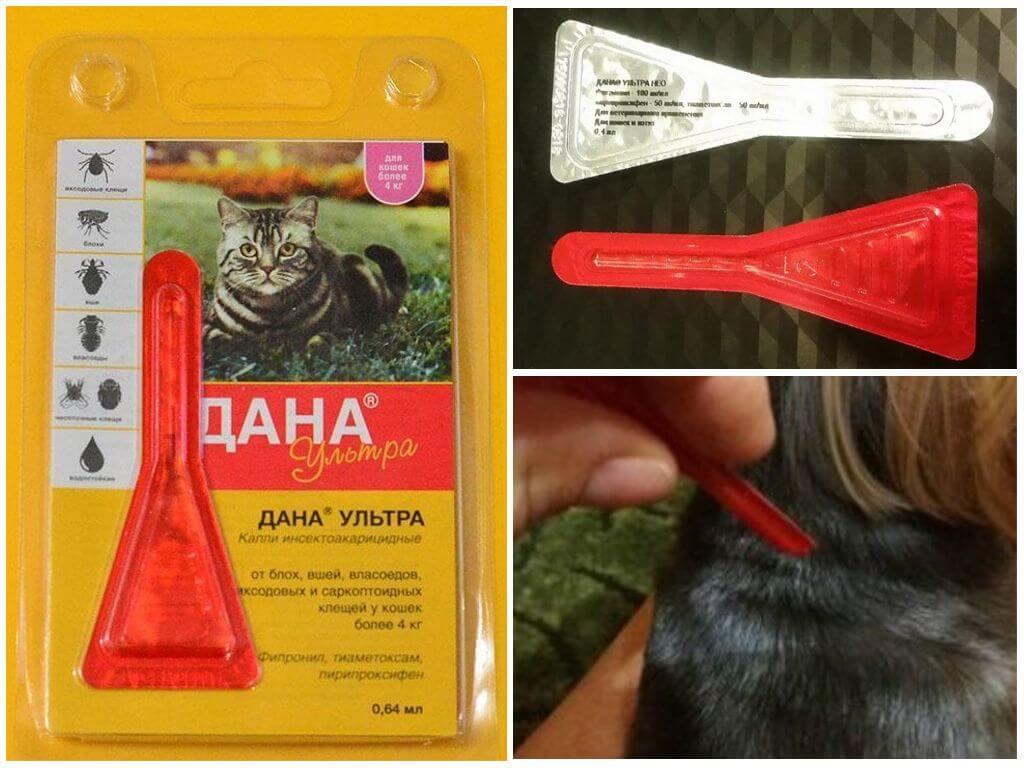 Дана спот-он для кошек: инструкция по применению