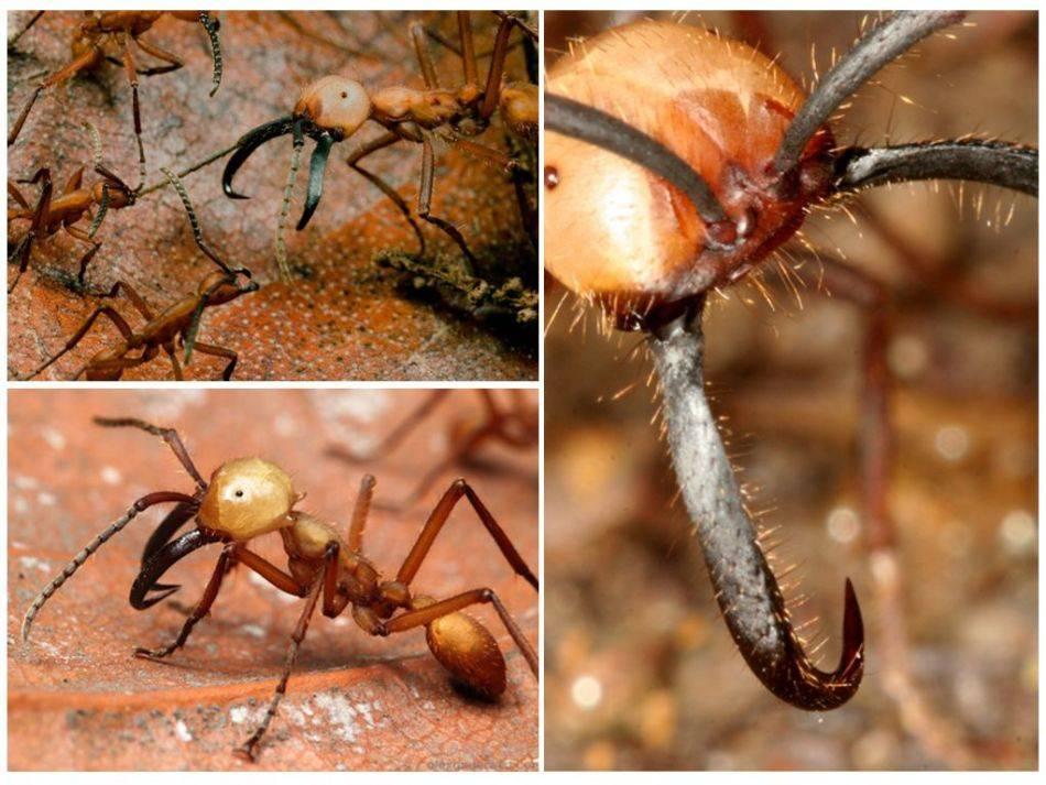Во сколько раз муравей поднимает больше. сколько весит и сколько может поднять муравей
