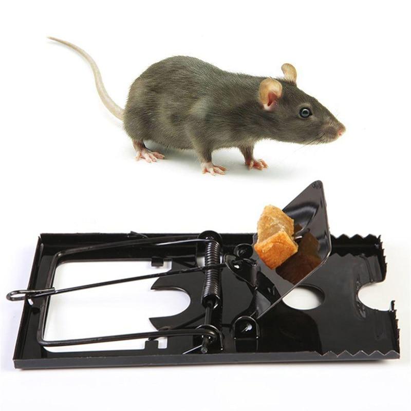 Как можно поймать крысу в домашних условиях
