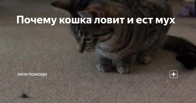 Если кот съел муху — какие могут быть последствия | плюсы и минусы