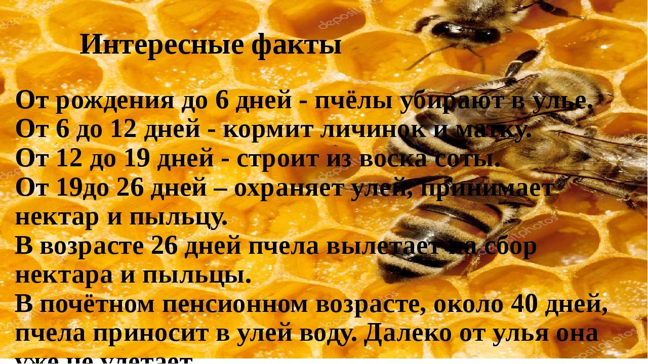 Интересные факты о пчелиных матках