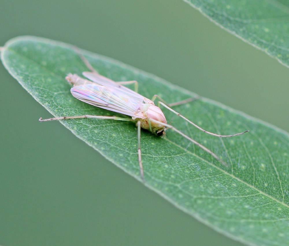 Чем лечить укусы комаров у детей, могут ли быть они опасны?