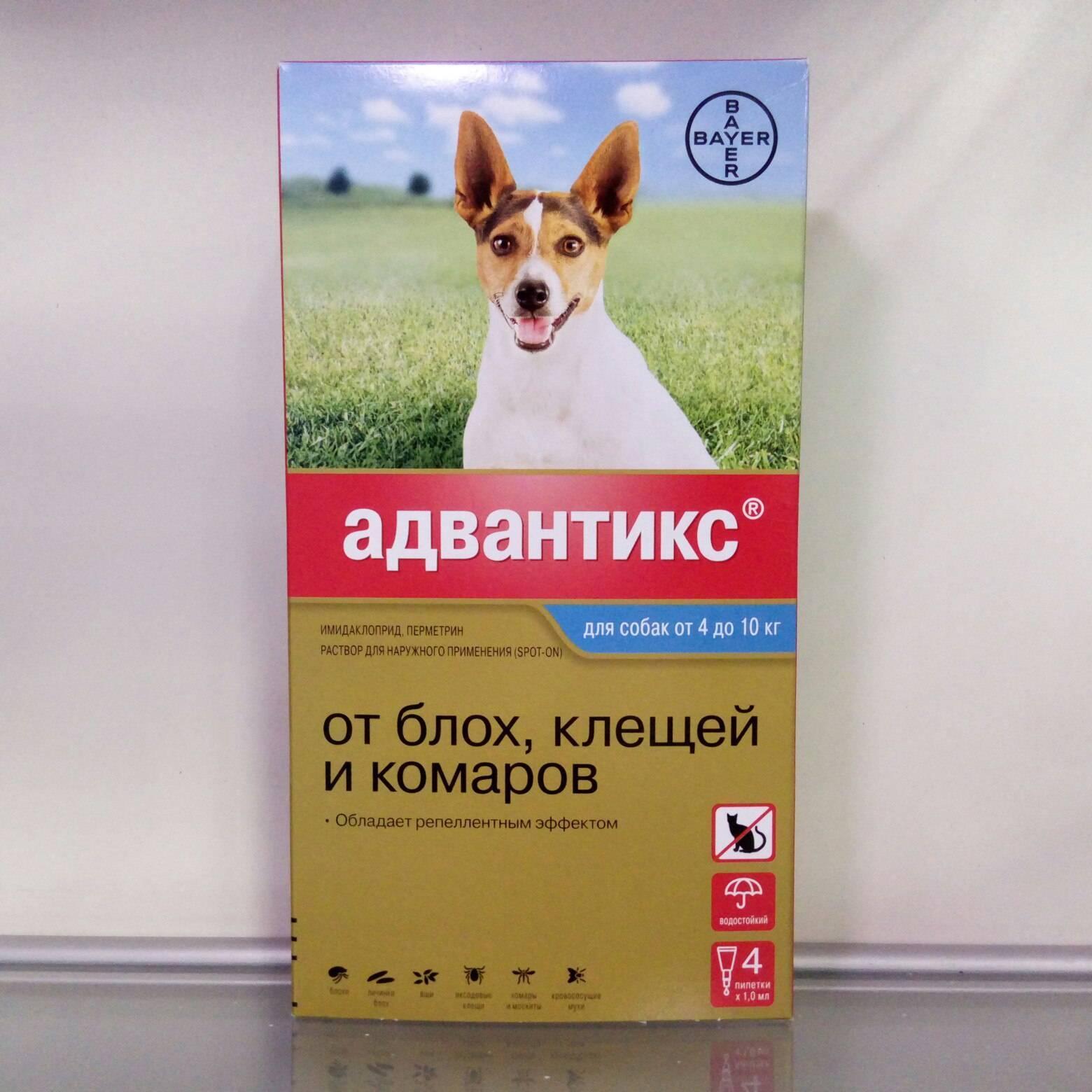 Адвантикс для собак: инструкция по применению, цена, отзывы