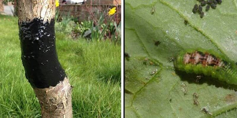 15 способов, как избавиться от тли - чем можно опрыскать или обработать растения