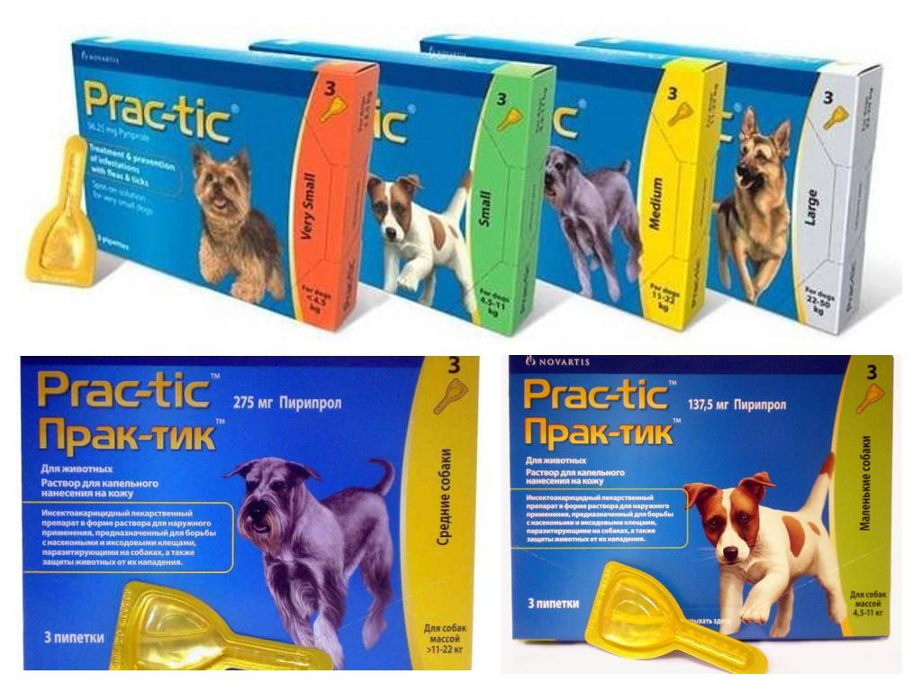 Капли от клещей для собак: на холку, в уши, инструкция по применению, бравекто, практик, фронтлайн, адвантикс, рольф