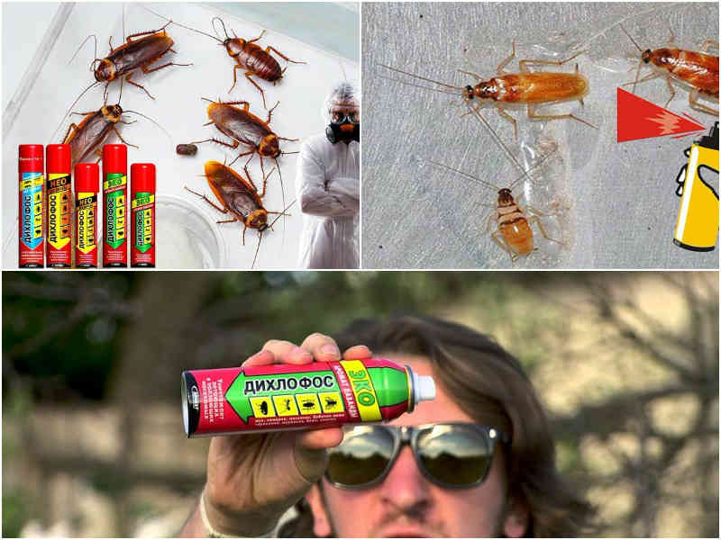 Дихлофос от тараканов как действует и как использовать по инструкции