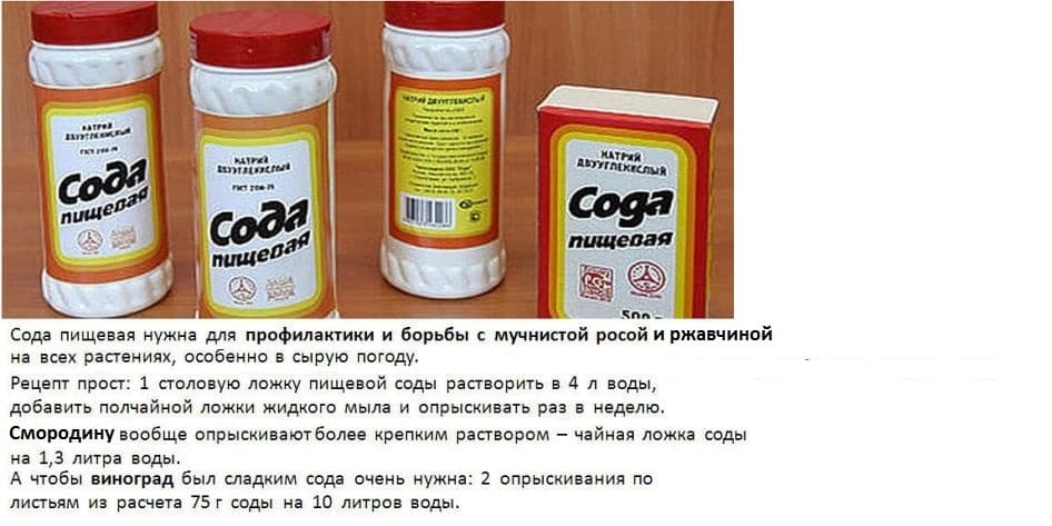 Пищевая и кальцинированная сода от тли