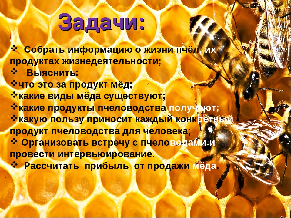 Отличия и сходства осы, пчелы, и шмеля, делают ли осы и шмели мед
