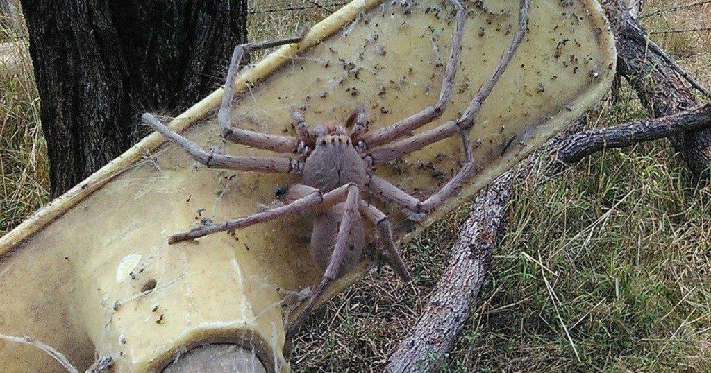 Виды пауков – фото, названия и описания