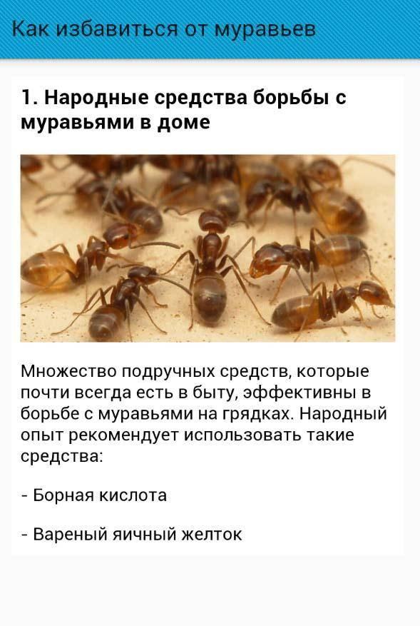Как вывести муравьев из частного дома